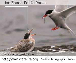 Ian.Zhou's PreLife Photo