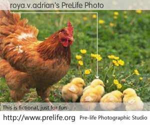 roya.v.adrian's PreLife Photo