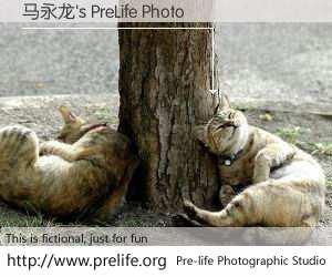 马永龙's PreLife Photo