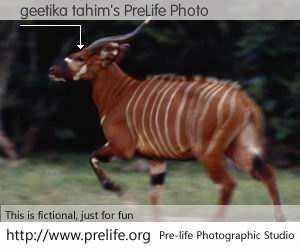 geetika tahim's PreLife Photo