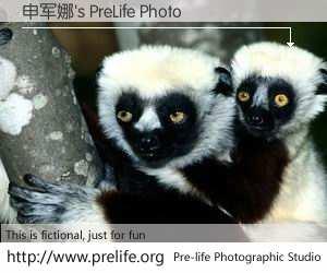 申军娜's PreLife Photo