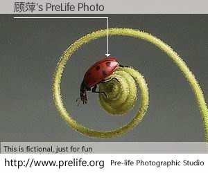 顾萍's PreLife Photo
