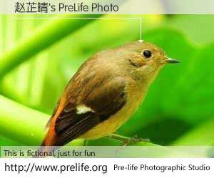 赵芷晴's PreLife Photo