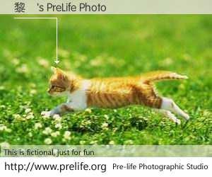 黎劍's PreLife Photo