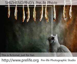 SHIZHENGPING's PreLife Photo
