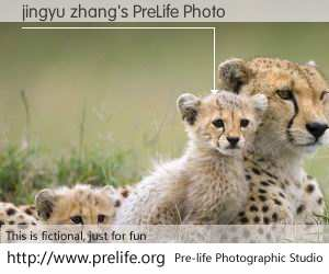 jingyu zhang's PreLife Photo