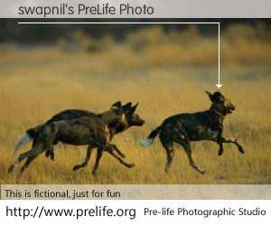 swapnil's PreLife Photo