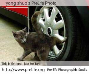 yang shuo's PreLife Photo