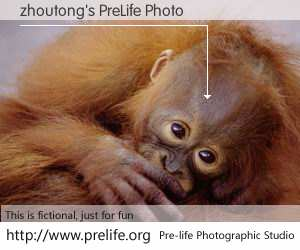 zhoutong's PreLife Photo