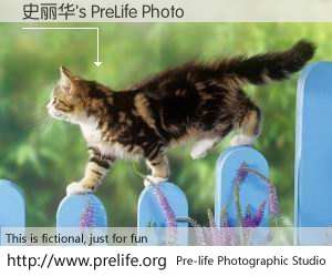 史丽华's PreLife Photo