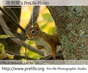 陈贺辉's PreLife Photo