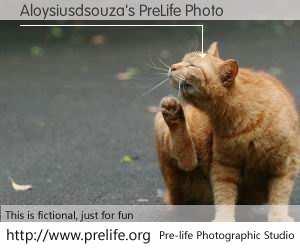Aloysiusdsouza's PreLife Photo