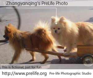 Zhangyanqing's PreLife Photo