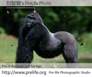 刘智慧's PreLife Photo