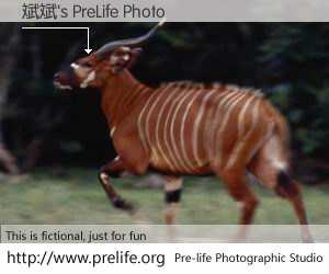 斌斌's PreLife Photo