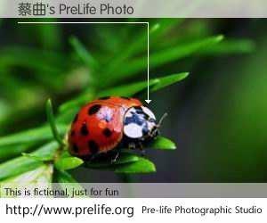 蔡曲's PreLife Photo