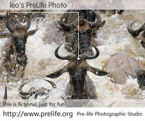 leo's PreLife Photo