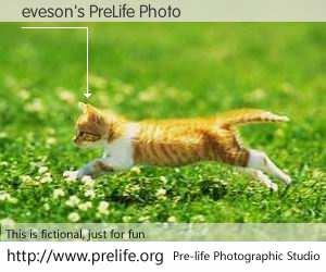 eveson's PreLife Photo