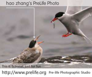 hao zhang's PreLife Photo