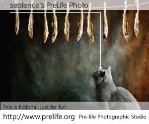sealence's PreLife Photo
