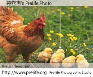 葛蓉惠's PreLife Photo