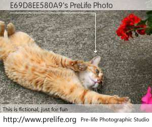 E69D8EE580A9's PreLife Photo