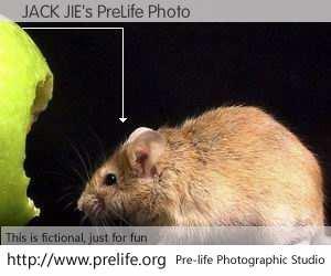 JACK JIE's PreLife Photo