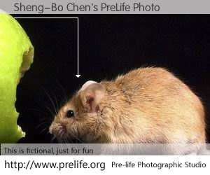 Sheng-Bo Chen's PreLife Photo
