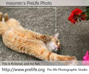 maomin's PreLife Photo