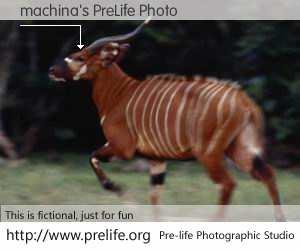 machina's PreLife Photo