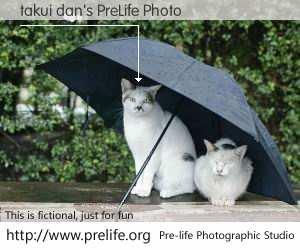 takui dan's PreLife Photo