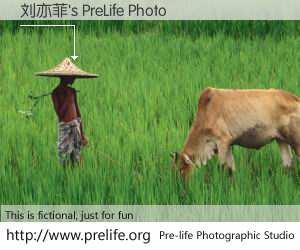 刘亦菲's PreLife Photo