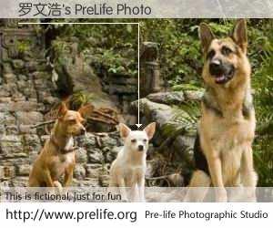 罗文浩's PreLife Photo