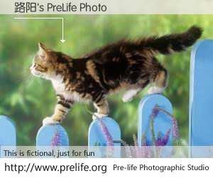 路阳's PreLife Photo