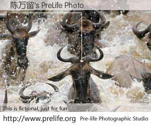 陈万留's PreLife Photo