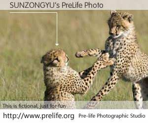 SUNZONGYU's PreLife Photo