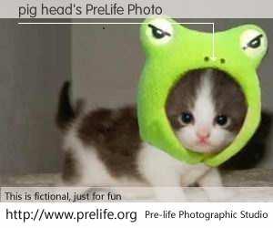 pig head's PreLife Photo