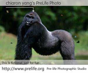 chiaron yang's PreLife Photo