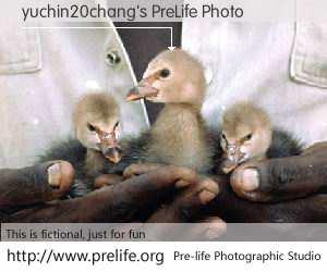 yuchin20chang's PreLife Photo