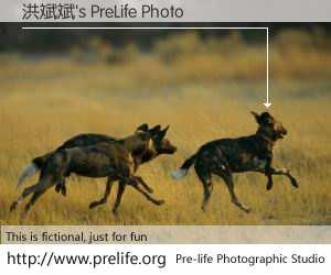 洪斌斌's PreLife Photo