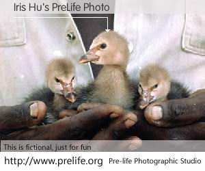 Iris Hu's PreLife Photo