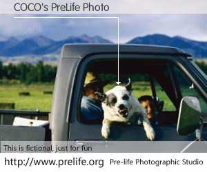 COCO's PreLife Photo