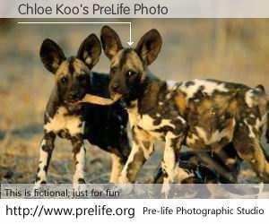 Chloe Koo's PreLife Photo