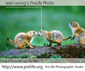 wen wong's PreLife Photo