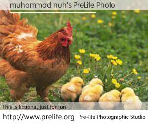 muhammad nuh's PreLife Photo