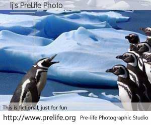 lj's PreLife Photo