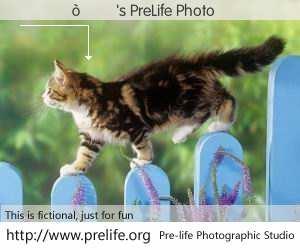 ������'s PreLife Photo