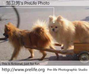 邹卫芳's PreLife Photo