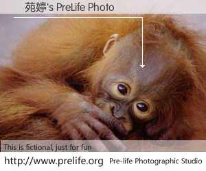 馮苑婷's PreLife Photo