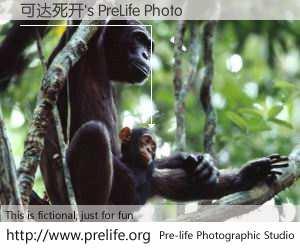 可达死开's PreLife Photo